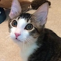 Adopt A Pet :: GW - Sugar Land, TX