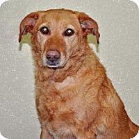 Adopt A Pet :: Sierra - Port Washington, NY