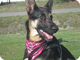 German Shepherd Dog Mix Dog for adoption in Tumwater, Washington - Alice