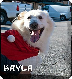 Chow Chow/Labrador Retriever Mix Dog for adoption in Lewisville, Texas - Kayla