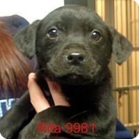 Adopt A Pet :: Rita - Greencastle, NC