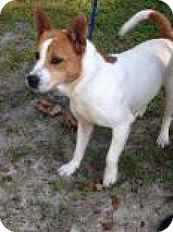 Akita Mix Dog for adoption in Middleburg, Florida - Max T