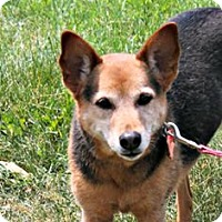 Adopt A Pet :: Shiloh - Lebanon, CT
