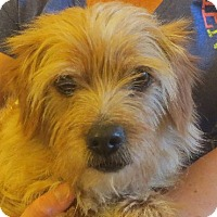 Adopt A Pet :: Melvin - Greenville, RI