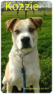 Husky Mix Dog for adoption in Bay City, Michigan - kosomoto