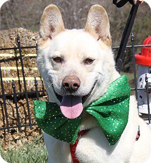 Husky/Shepherd (Unknown Type) Mix Dog for adoption in Marietta, Ohio - Charlie (Neutered)