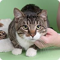 Adopt A Pet :: Derby - Wilmington, DE