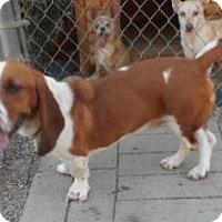 Adopt A Pet :: Happy - Yucaipa, CA
