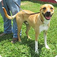 Adopt A Pet :: Rodney - Reeds Spring, MO