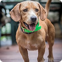 Adopt A Pet :: River - Chesterfield, VA