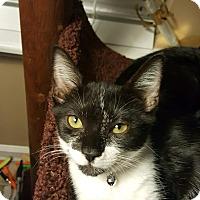 Adopt A Pet :: Sloan - Mount Pleasant, SC