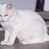 Adopt A Pet :: David - Ashland, VA