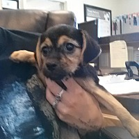 Adopt A Pet :: Chloe - Fort Scott, KS