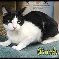Adopt A Pet :: Panda - 442 / 2017 - Maumelle, AR