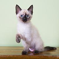 Adopt A Pet :: Beatryce - Nashville, TN