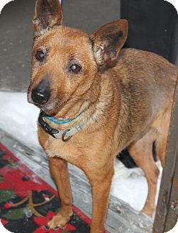 Basenji/Terrier (Unknown Type, Small) Mix Dog for adoption in Seville, Ohio - Puppers