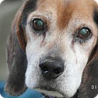 Adopt A Pet :: Jasper - Indianapolis, IN