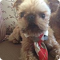 Adopt A Pet :: SIR JAMES - ADOPTION PENDING - Los Angeles, CA