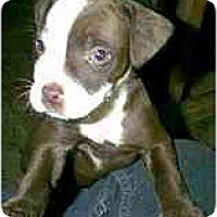 Adopt A Pet :: Winnie - dewey, AZ