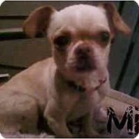 Adopt A Pet :: Mia - Arlington, TX