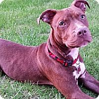 Adopt A Pet :: Bernie - Oak Creek, WI