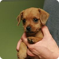 Adopt A Pet :: Robin - Canoga Park, CA