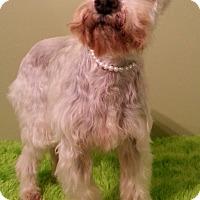 Adopt A Pet :: Tilly - Russellville, KY