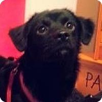 Adopt A Pet :: Marlie - Murphy, NC