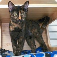 Adopt A Pet :: Brandi - Dover, OH