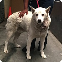 Adopt A Pet :: Kona - Santa Monica, CA
