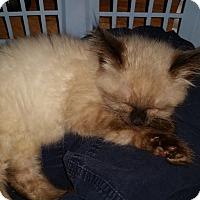 Adopt A Pet :: Luna - Davis, CA