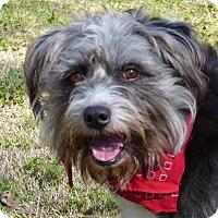 Adopt A Pet :: Mattie - Mocksville, NC