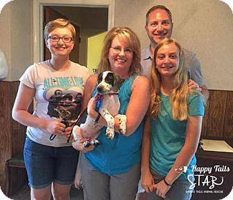 American Bulldog/Bluetick Coonhound Mix Puppy for adoption in Northville, Michigan - zAA16 Arya-ADOPTED