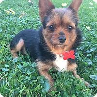 Adopt A Pet :: Louise - Troy, MI