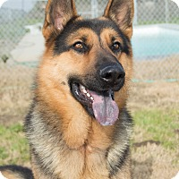 Adopt A Pet :: Ransom - Patterson, CA