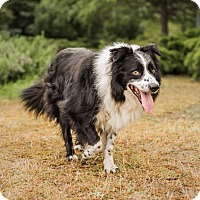 Adopt A Pet :: RODNEY - Corning, CA