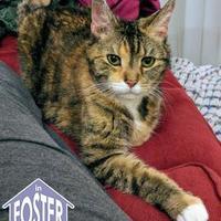 Adopt A Pet :: Lucia - Ann Arbor, MI