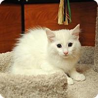 Adopt A Pet :: Deo - Savannah, GA