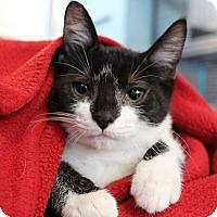 Adopt A Pet :: Coronado - Sarasota, FL