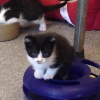 Adopt A Pet :: Duncan - Randleman, NC