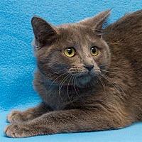 Adopt A Pet :: Hera - Westland, MI