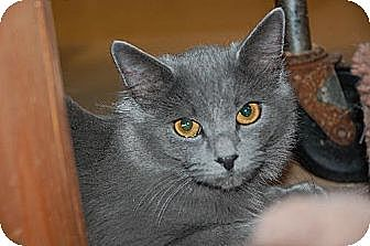 Domestic Mediumhair Cat for adoption in Alpharetta, Georgia - Trudy