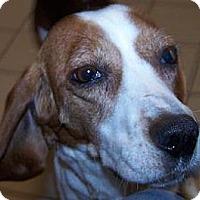 Adopt A Pet :: Emma - Jackson, MI