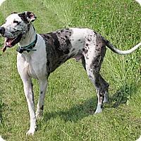 Adopt A Pet :: Rocky - Woodstock, IL