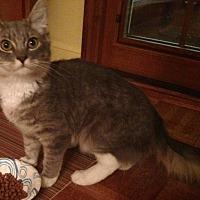Adopt A Pet :: Cupcake - Brooklyn, NY