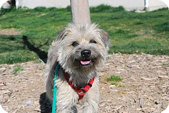 Poodle (Miniature)/Terrier (Unknown Type, Medium) Mix Dog for adoption in Twin Falls, Idaho - Dibs