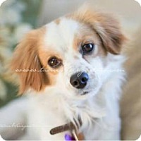 Adopt A Pet :: Andy ** Reviewing ALL Apps Now - Youngstown, OH