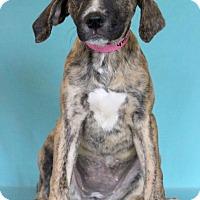 Adopt A Pet :: Aliyah - Waldorf, MD