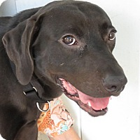 Adopt A Pet :: Ace! Best Friend to ALL - St Petersburg, FL