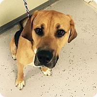 Adopt A Pet :: Rebel - Pittsburg, KS